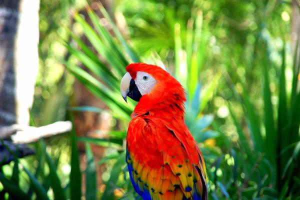 Bird Park photo