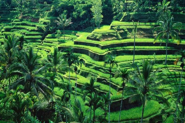 Rice Terraces Photo