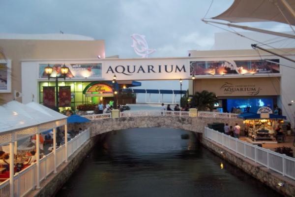 Interactive Dolphin Aquarium Photo