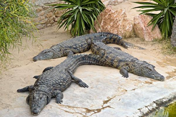 Crocodile farm photo