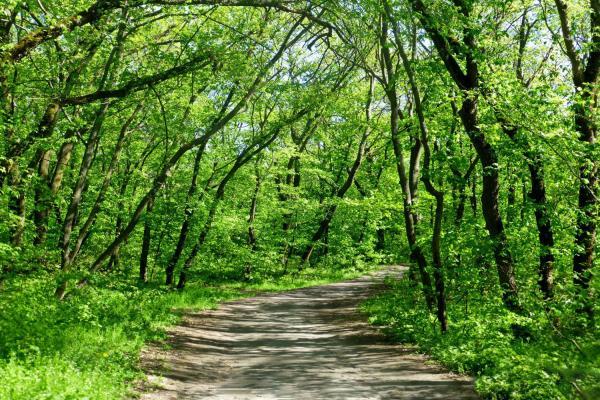 Samara forest photo