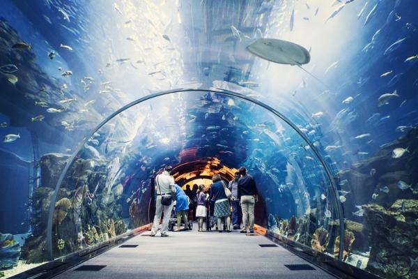 Аквариум Дубая фото
