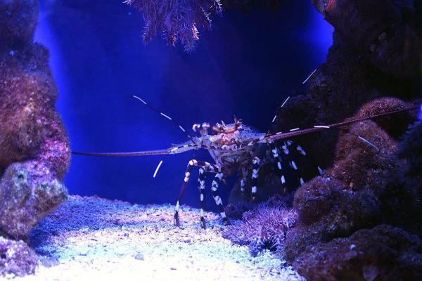 Подводная обсерватория фото