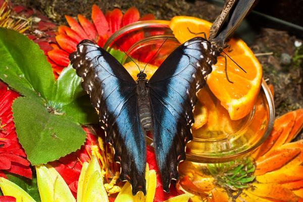 Парк бабочек фото