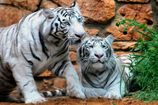 Зоопарк фото
