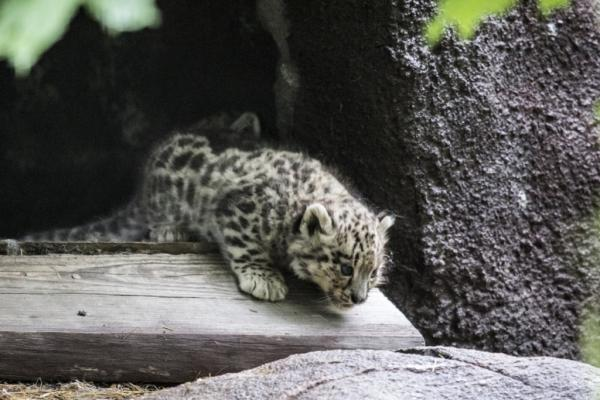 Foto del zoológico