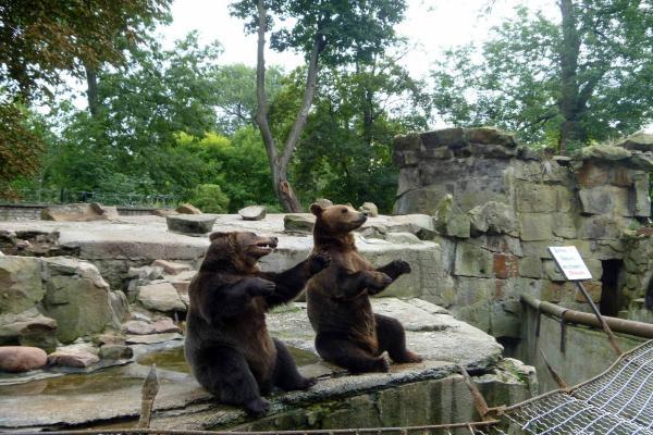 Kaliningrad Zoo photo