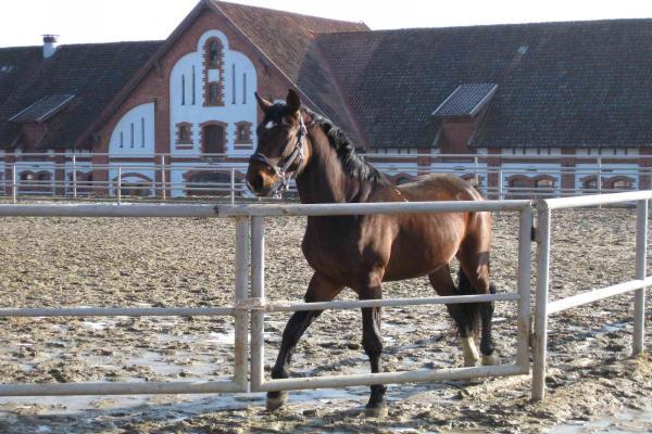 "Horse factory ""Georgenburg"" photo"