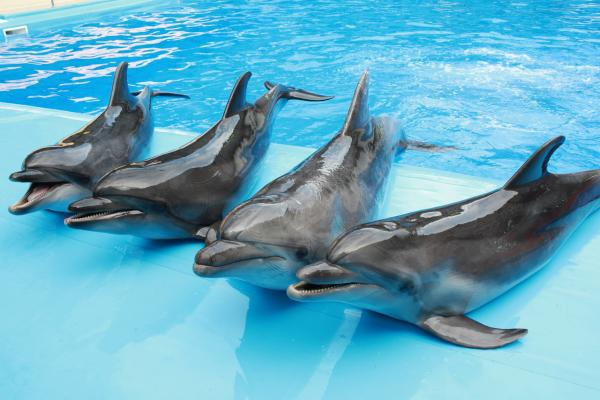 Dolphinarium photo