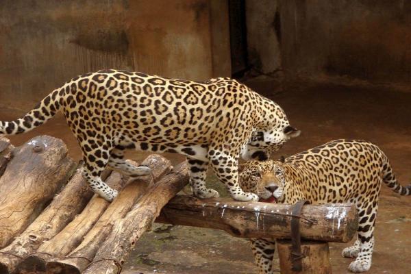 Зоопарк Дехивала фото