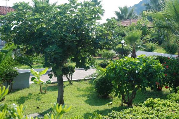 Botanical Garden Photo