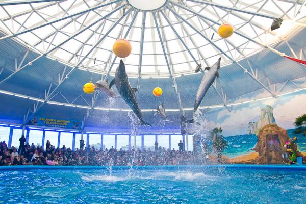 "Dolphinarium ""Nemo"" photo"