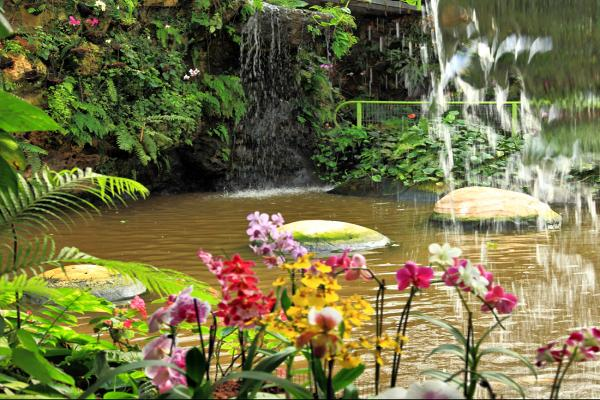 """Park of orchids and butterflies """"Utopia"""" photo"""