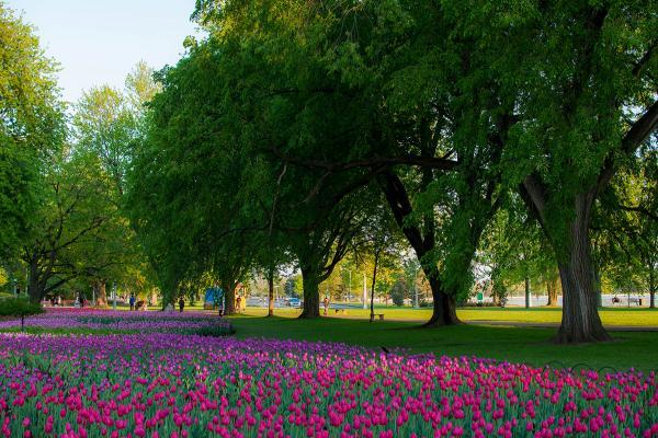 Зеленый остров фото