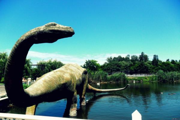 Rostov Zoo photo
