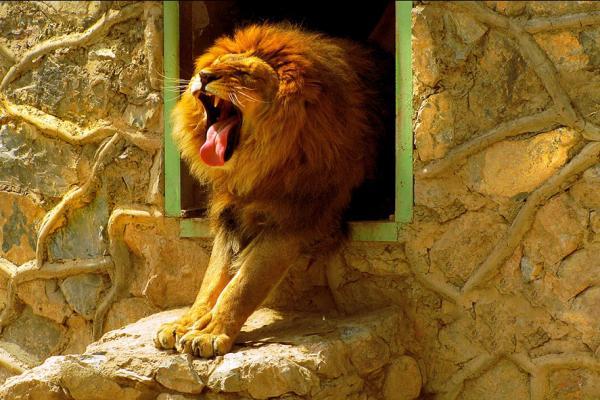 Ташкентский зоопарк фото