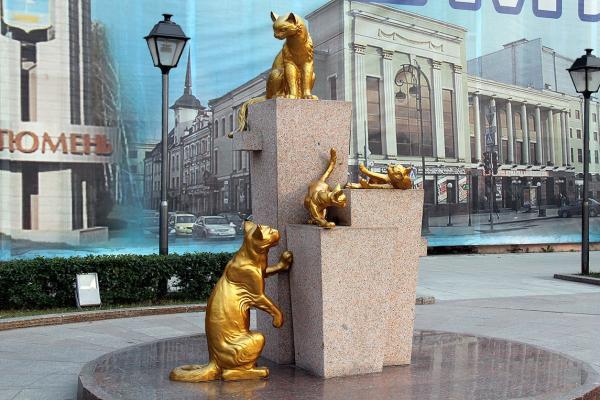 Square Siberian cats photo