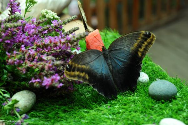 """Butterfly House """"Delight"""" photo"""