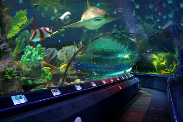 Oceanarium photo
