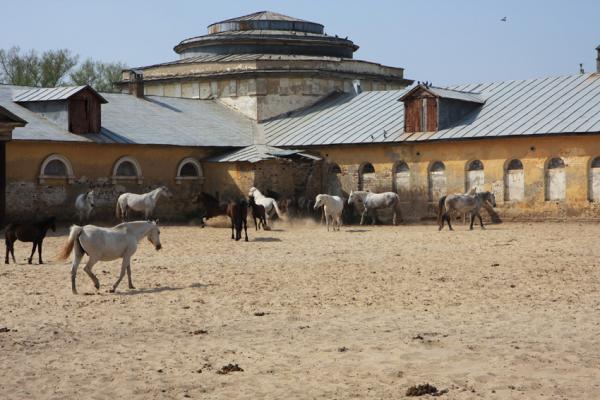 Хреновской конный завод фото