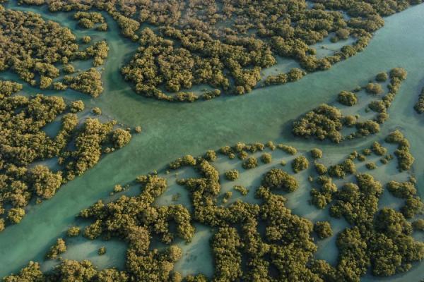 Eastern Mangrove Lagoon National Park photo