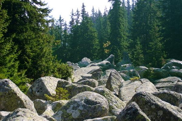 Vitosha National Natural Park photo