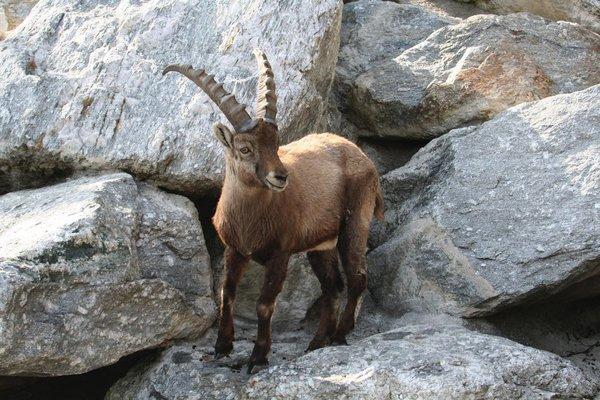Foto de Alpine Zoo