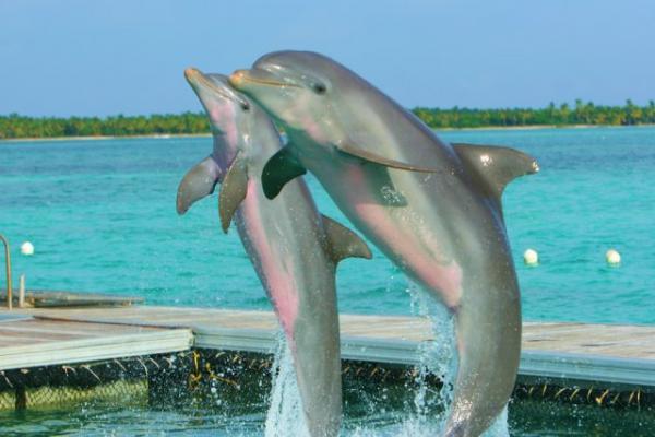 Dolphin Island photo