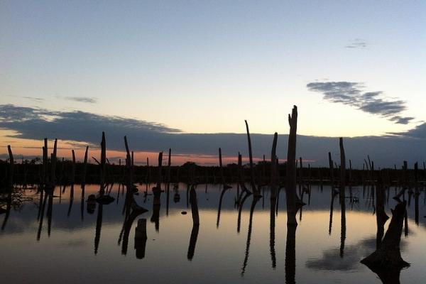 Bavaro swamp photo
