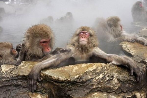 Парк обезьян фото